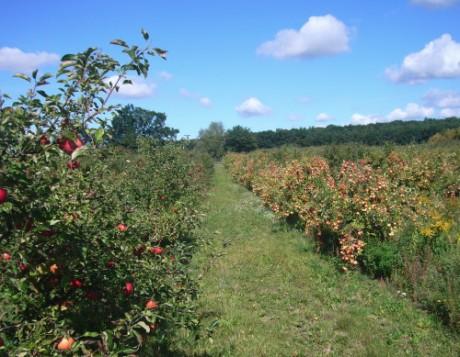 Apfelbäume, soweit das Auge reicht