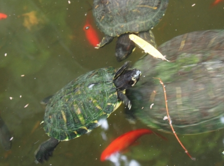 Schildkröten. Ich mag Schildkröten.